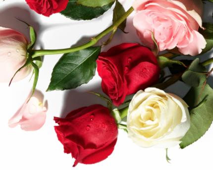 Dozen Roses Whole Foods